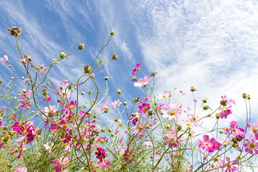 16465544 - blossom