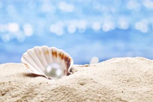 35572897 - pearl oyster in the sand. blurred sea at the background.
